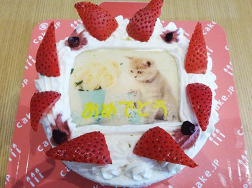 解凍後のケーキがこちら